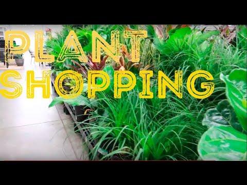 Plant Shopping at Walmart | Pilea Plant