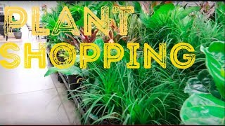 Plant Shopping at Walmart   Pilea Plant