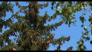 Где стоят фотоловушки в боровлянских лесах и когда будет облетать квадрокоптер?