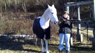 Clicker Training Your Horse To Kill Zombies