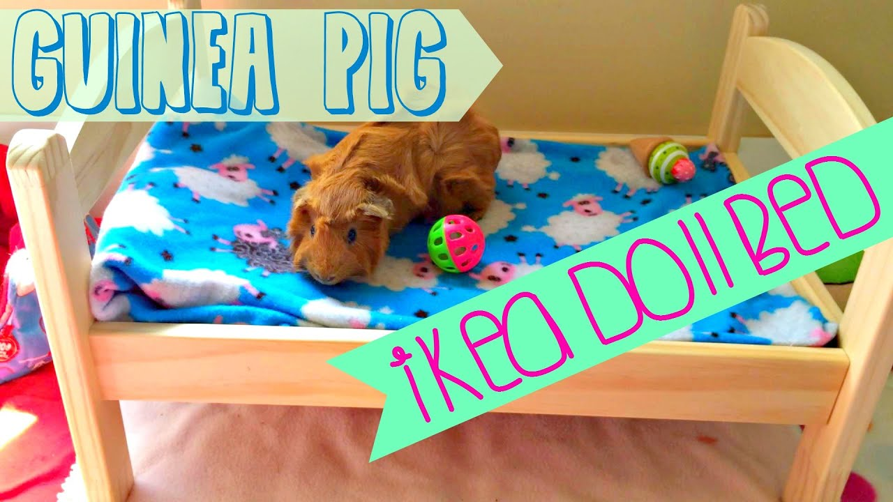 Guinea Pig IKEA Doll Bed! - YouTube