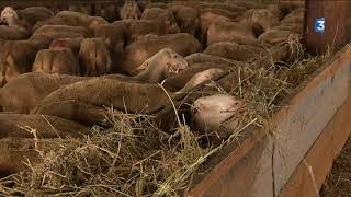 Sécheresse dans le Sud-Aveyron : les éleveurs commencent à en souffrir