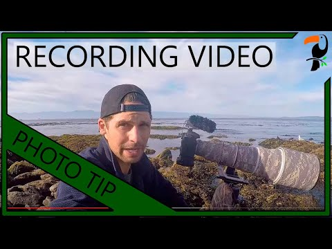 Photography Tips - How To Record A Good Quality Wildlife Video With Your DSLR