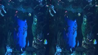 """America's Best Aquariums in 3d Open"""