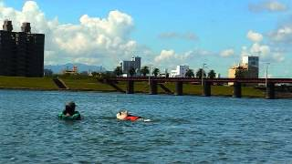 Hana's Swimming With Japanese 3 Trains, Siberian Husky Hana