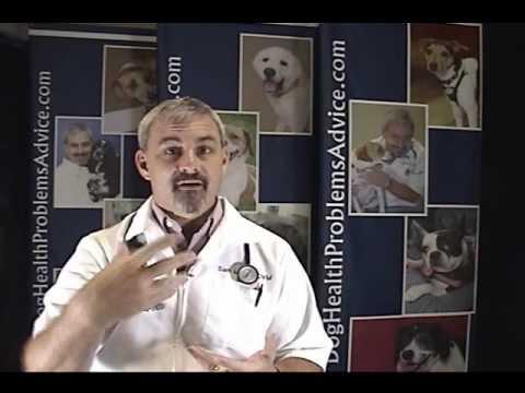 Dog Parvovirus - Parvovirus in Dogs