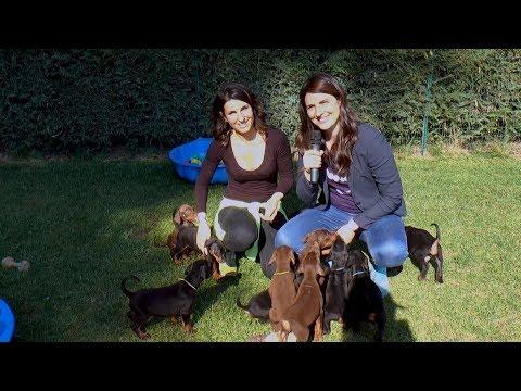 Conosciamo meglio i Dobermann - Amico cane