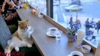 Смешные коты/ Видео-приколы