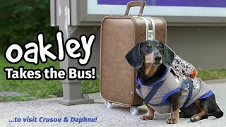 Ep#4: OAKLEY TAKES THE BUS - Goes to Visit Crusoe & Daphne! [Part 1]