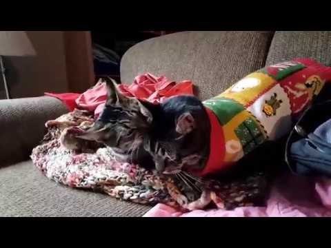 Kitten Christmas Sweater.Cat In Ugly Christmas Sweater Snuggles With Kitten After Straying Outside Vlogmas