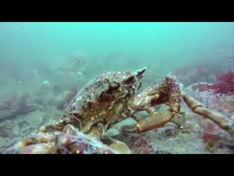 Diving from Lehinch April 2017