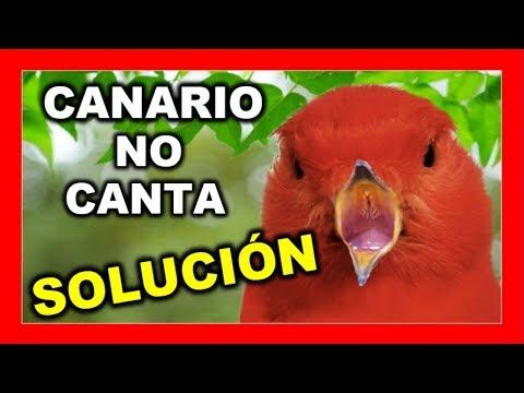 🐦MÚSICA PARA CANARIOS🐦Mejorar Canto Canarios 😱 (FUNCIONA) #canarios