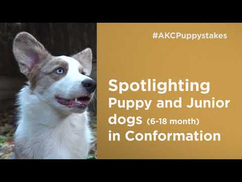 AKC Royal Canin National All-Breed Puppy and Junior Stakes (2)