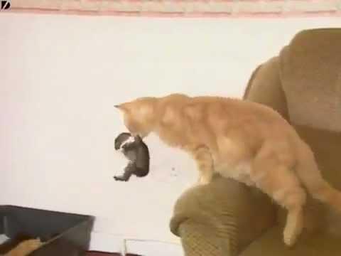 cat adopts baby rabbit amazing   youtube