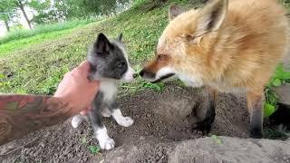 Finnegan Fox and Kipper