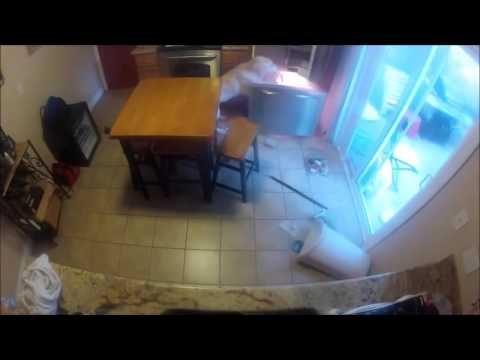 Naughty Dog Caught on Camera Opening Fridge