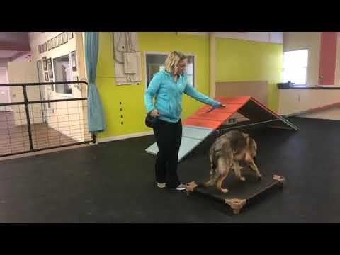 Dog training | Introduction to place | Solid K9 Training Dog Training
