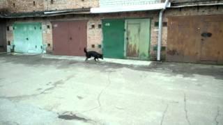 Животные ищут дом: Приют