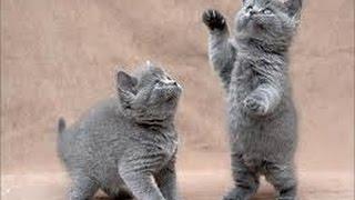 Смешные кошки новые серии. Веселое видео 2014 года.