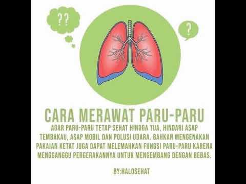 Luar Biasa Poster Cara Menjaga Organ Pernapasan Pada Manusia