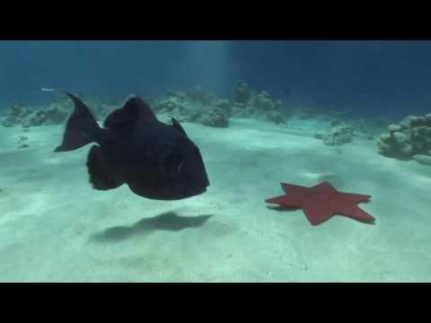 Wissenschaft für jedermann - Ozeane, Meere, Seen: ein Forscherleben unter Wasser