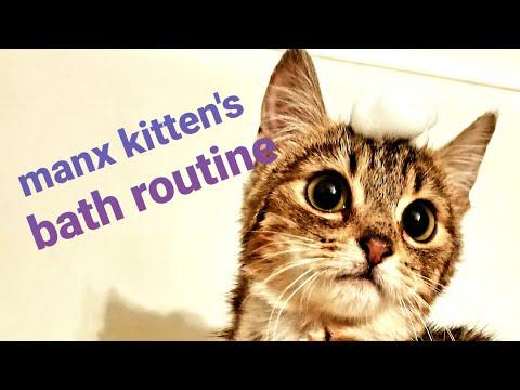 Manx Syndrome Kitten's Morning Butt Bath Routine