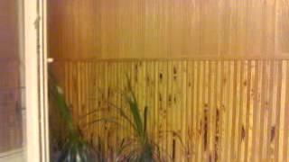 видео Бамбуковые панели для стен в интерьере. 3 д панель из бамбука