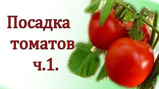 Посадка помидор . Самый простой и проверенный способ посева семян .