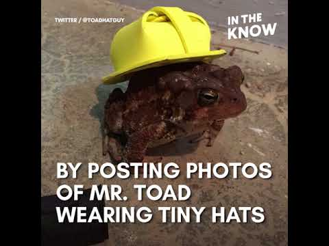 b2ac8d0a6 Alabama man makes hats for the toads on his porch