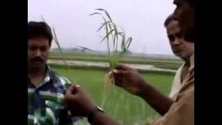 Traditional VS Drum Seeder Burdwan   মুখার্জী ই টেক