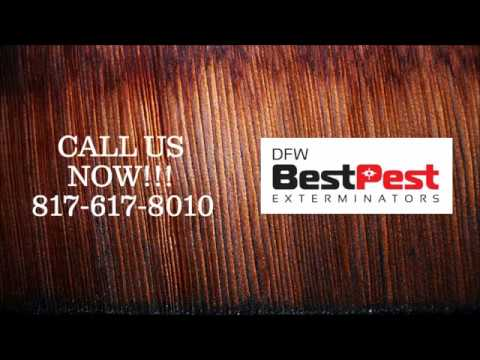 Best Spiders Control in Grand Prairie Tx | 817-617-8010 | FREE ESTIMATES