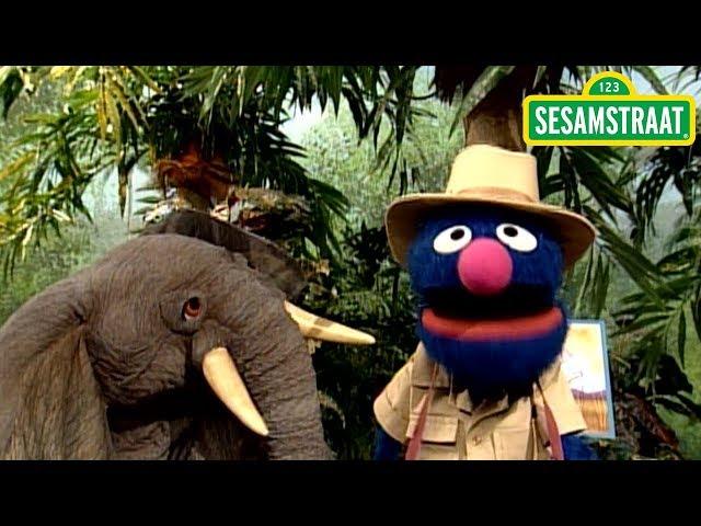 Op zoek naar een olifant - Grover - Sesamstraat