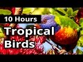 TROPICAL BIRDS For 10 Hours Relaxation Background Meditation mp3