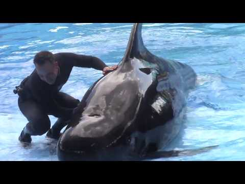 Pilot Whale Preshow - Ava and Ace 9/24/17