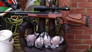 Airgun hunting WOOD PIGEONS july 2015