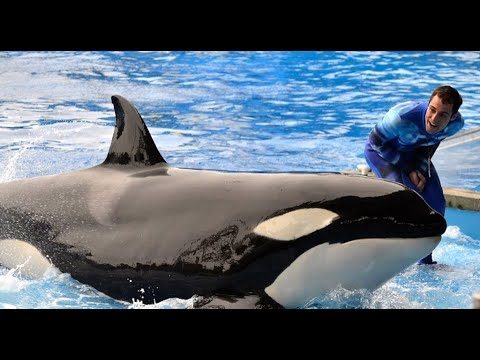 "SeaWorld Killer Whale Trainer Responds to ""Blackfish"""