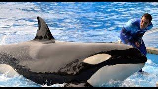"SeaWorld Killer Whale Trainer Responds to ""Blackfish"""