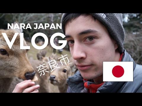 Crazy Deer of Nara, Japan!! (Kyoto, Japan Vlog 3)