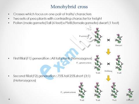 Principle of inheritance Part 1 Class 12th CBSE Biology - Hindi thumbnail