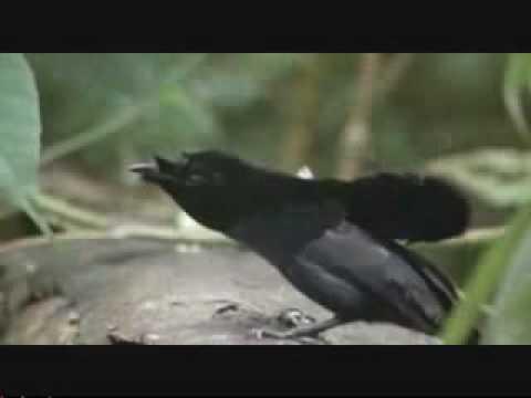 Бальзаковского возраста птички в москве минета
