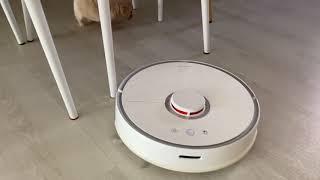 제니Jenny D12 로봇청소기 처음 본 강아지 반응