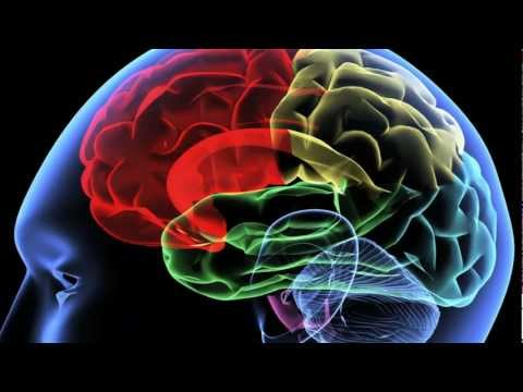 Human Neural Net Autonomy
