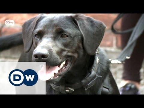 Man's best friend in Germany | Focus on Europe