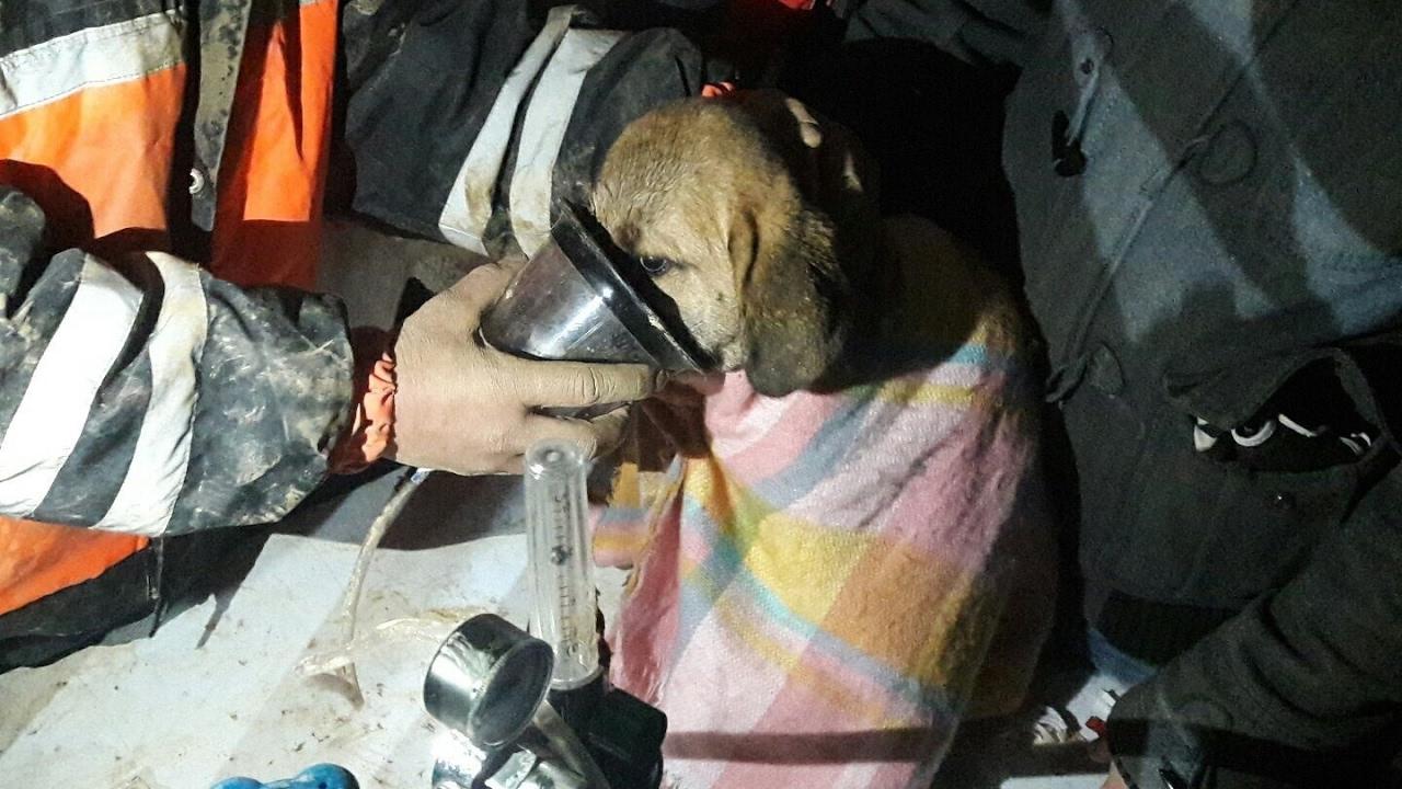 Salvan a un cachorro atrapado en un pozo (Mira el VIDEO)