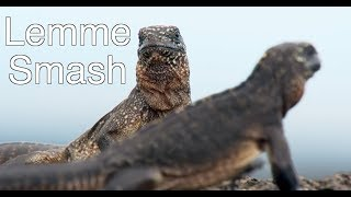 Lemme Smash - Lizard Edition