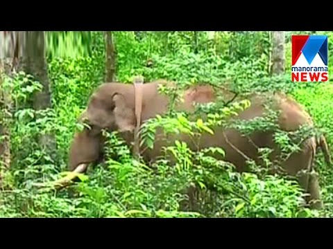 SMS alert facility introduced for elephant warning   Manorama News