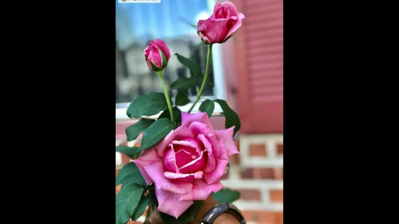 #Shorts / Beautiful Garden #shortvideo / Salu koshy/Lisa Babu Garden