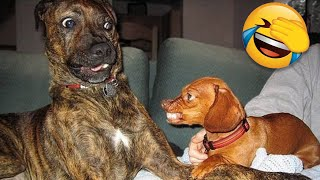 Funny Dogs 🐶 And Other Animals That Will Make You Laugh All Day Long 😹