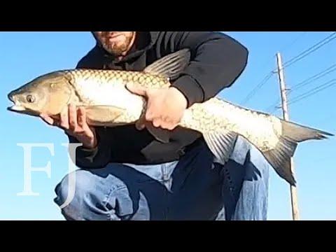 Big Fish In AZ Canal (New Species PB)