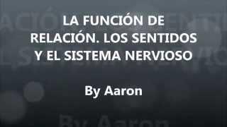 La función de relación  Los sentidos y el sistema nervioso